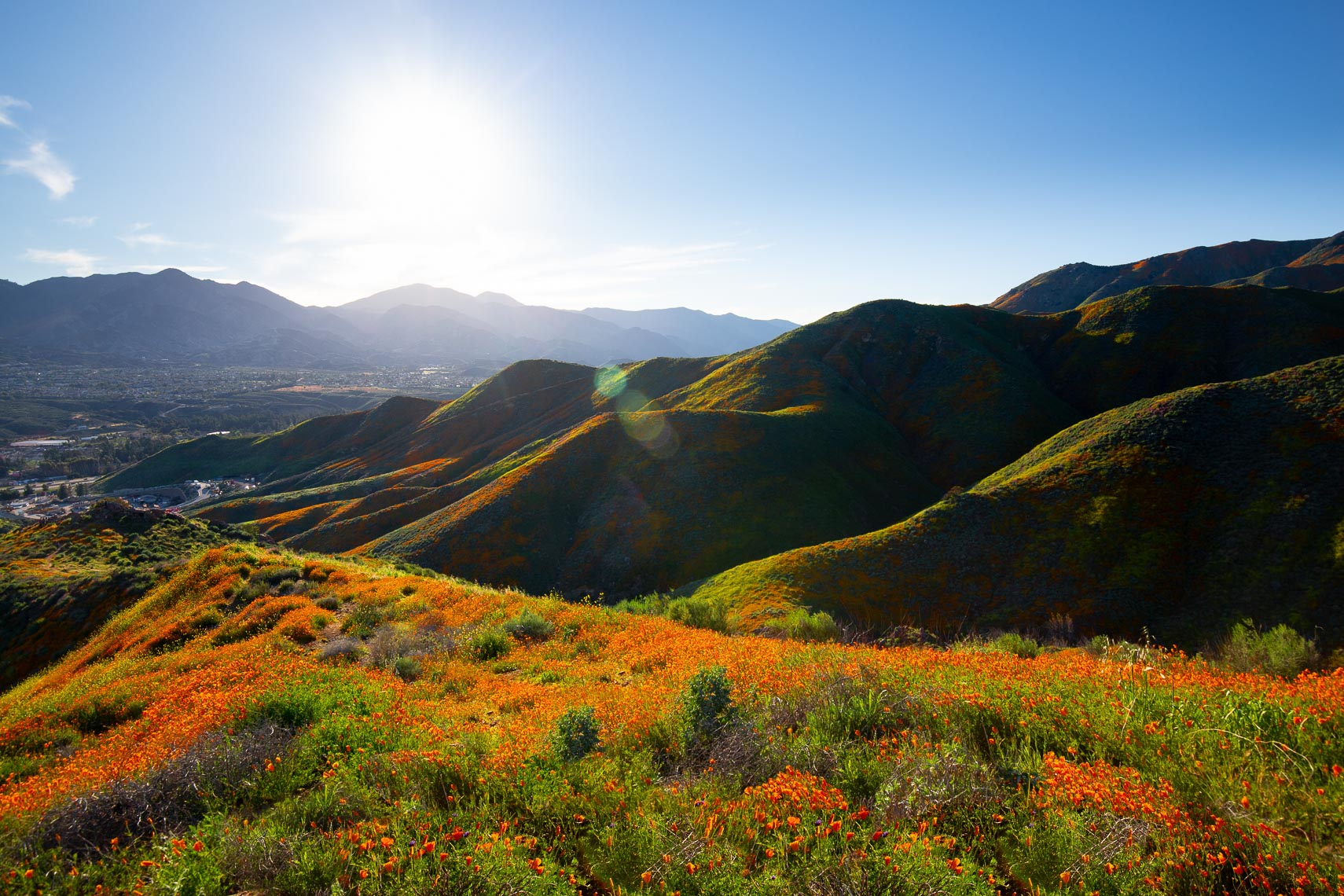 California Superbloom